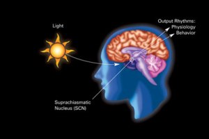 Diagram of light's effect on human physiology and behavior. Courtesy Wikipedia