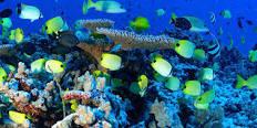 noaa-marine-nat-monument-reef