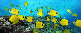 noaa-marine-nat-monument-yellow-fish